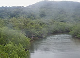 Live river and mangrove cam.