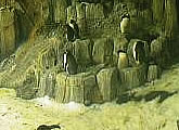 Webcam of penguins at the  Montréal Biodôme.