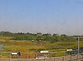 Live webcam from Hong Kong's Wetland Park.