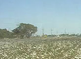 Live streaming cam over a cotton field.
